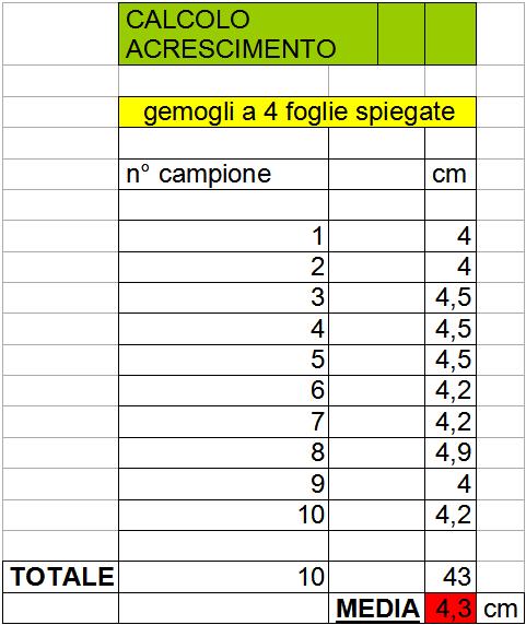 Calcolo accrescimento germogli Giuggiolo a 4 foglie